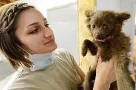 Dog Parvo Symptoms - Treatment & Prevention